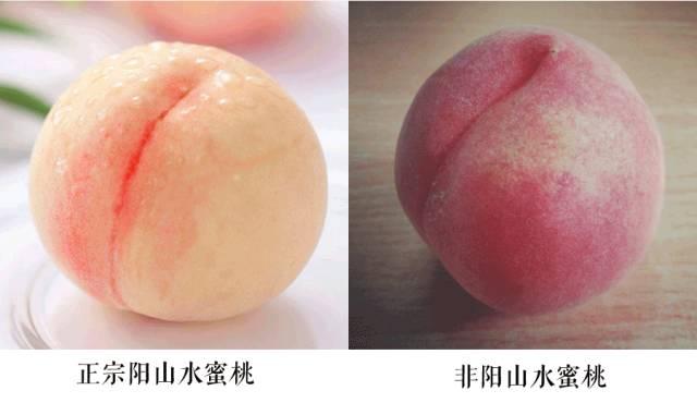 无锡阳山水蜜桃怎么辨别真假