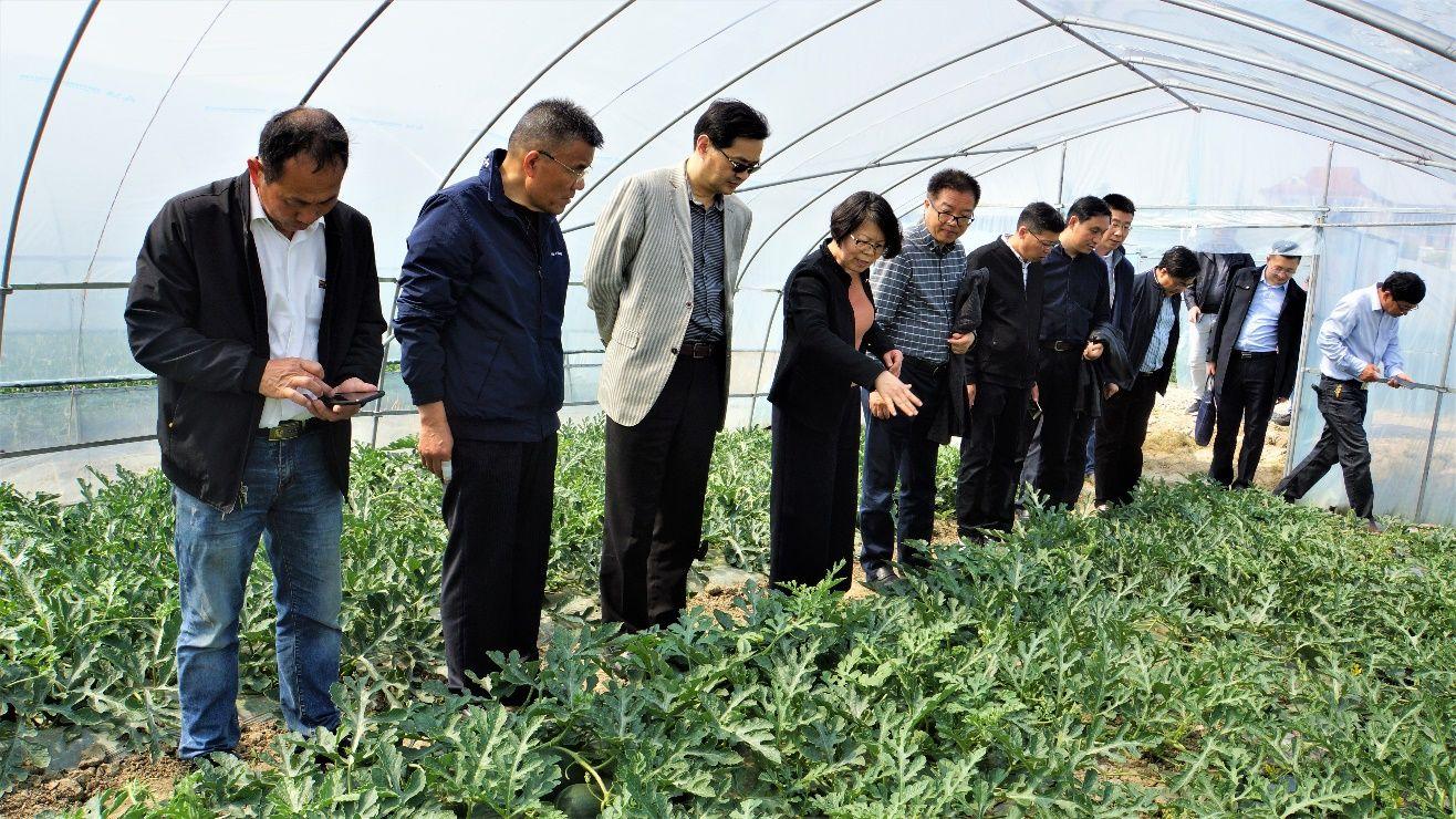 院党委书记、院长蔡友铭赴金山考察特色西瓜新品种示范种植情况